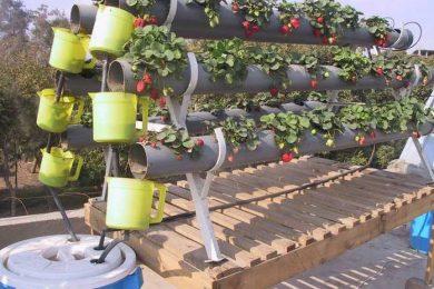 دراسة جدوى مشروع زراعة الأسطح