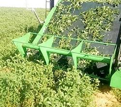 ماكينة-حصاد-الملوخية-من-طنطا-موتور