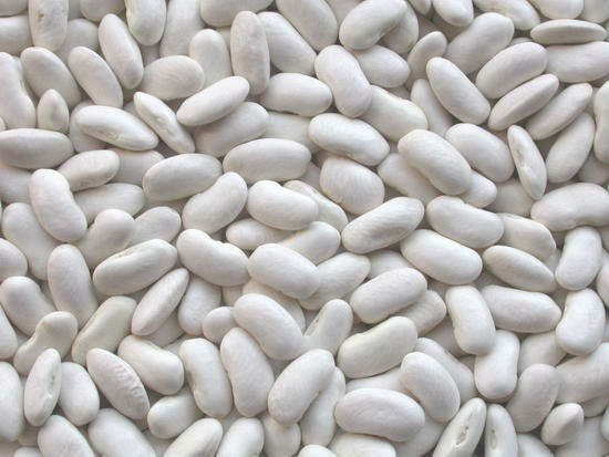 تصدير-فاصوليا-بيضاء-مصرية