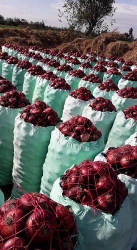 تصدير-بصل-احمر-طازج-من-شركة-فلمار