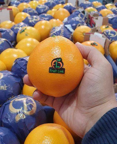 توريد-وتصدير-برتقال-بسره-نافل-من-شركة-فروت-لينك